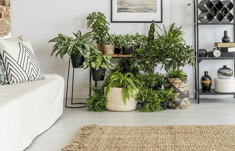 decoração tropical com plantas