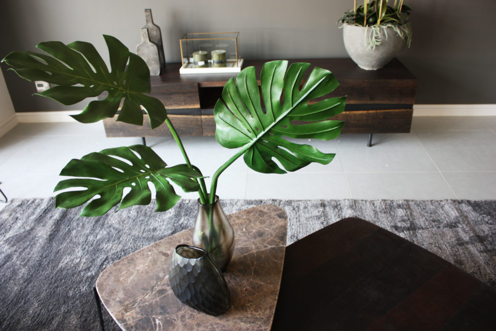 plantas para dentro de casa 3
