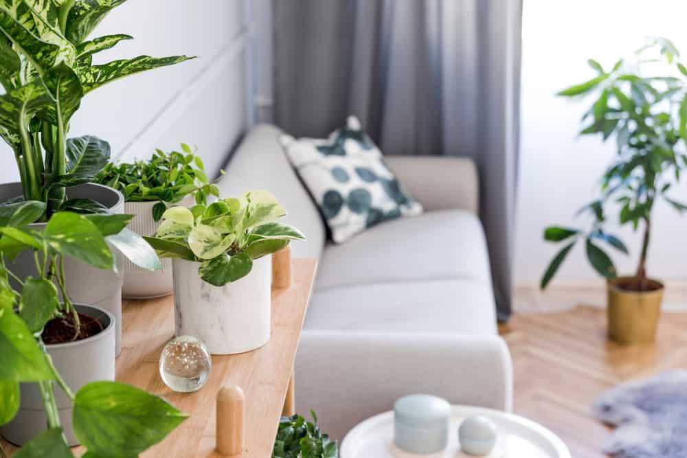 plantas para dentro de casa 2
