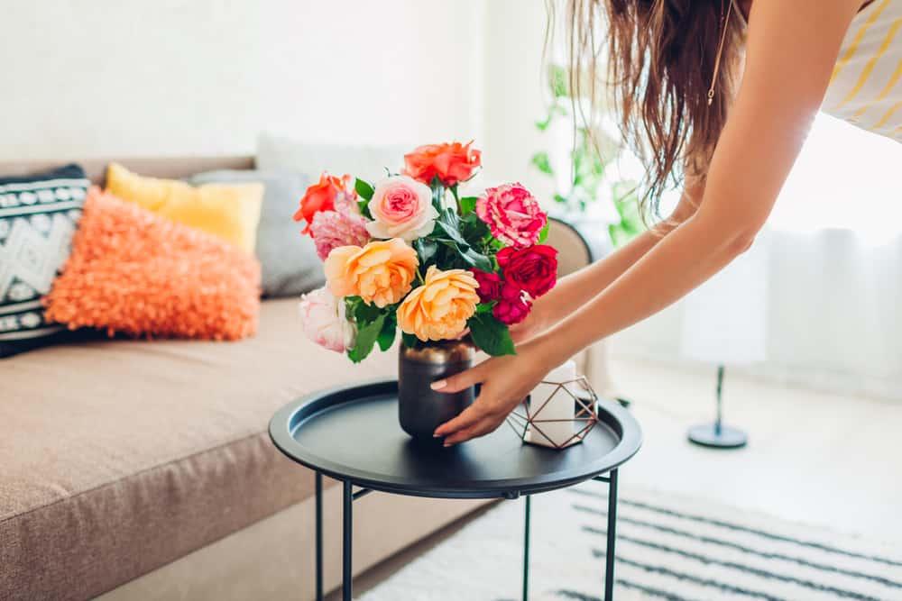 plantas para dentro de casa 8