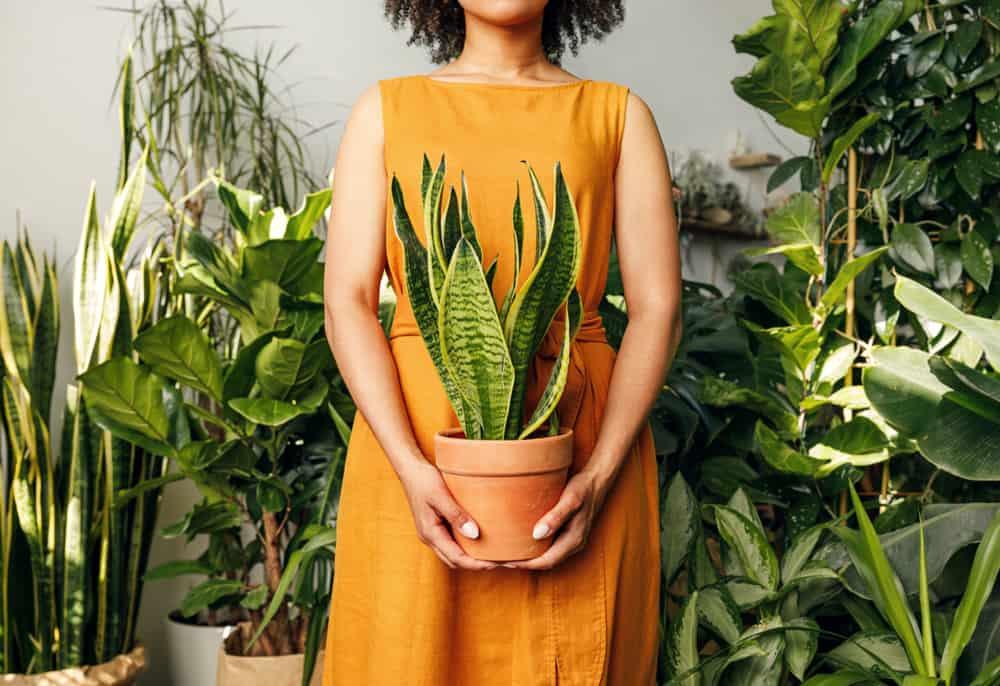 plantas para dentro de casa 6