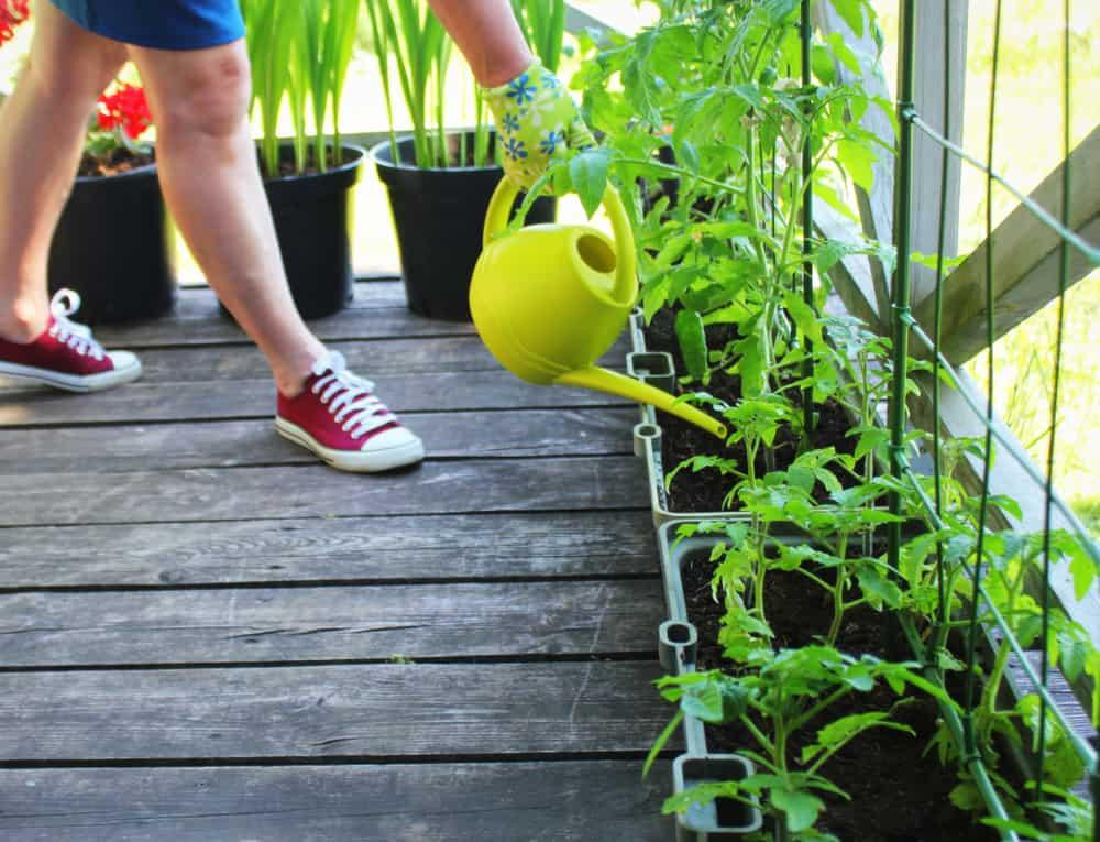 horta em apartamento 5