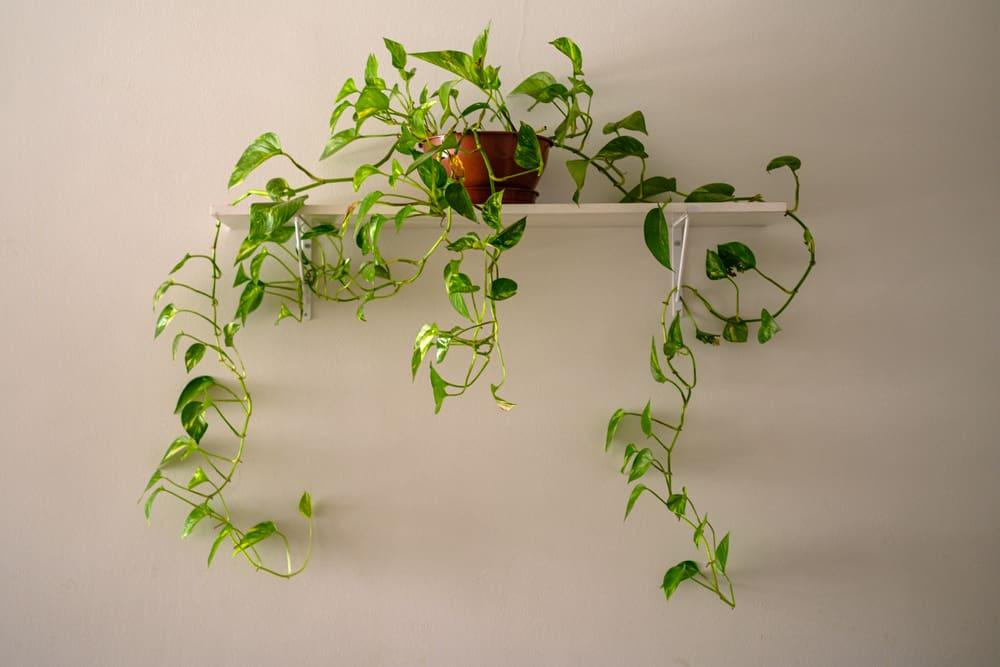 plantas para dentro de casa 5