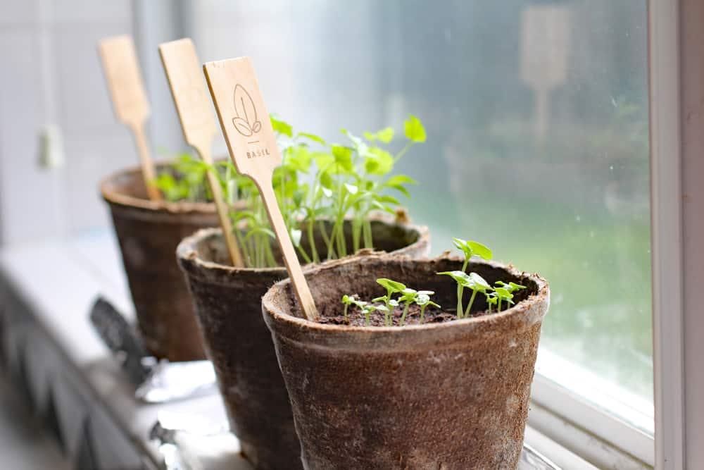 O que você precisa saber sobre horta em apartamento
