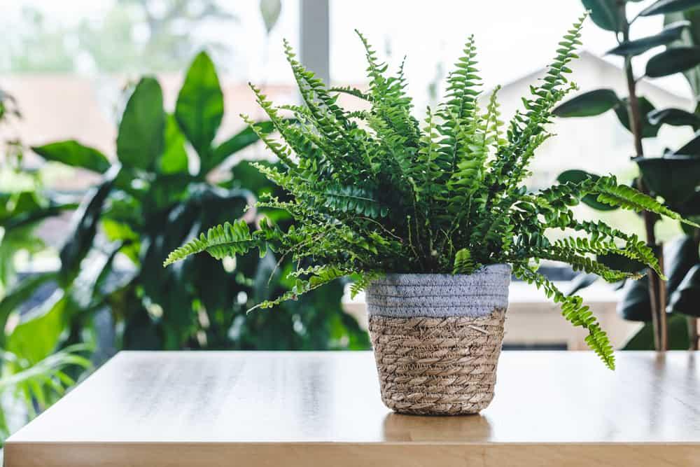 plantas para dentro de casa 4